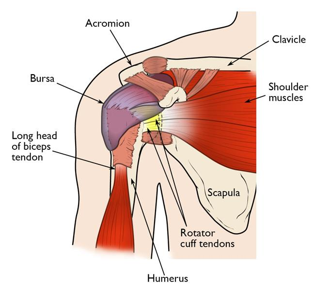 Know the Rotator Cuff tear symptoms, causes, and best treatment at Hyderabad Shoulder Clinic, shoulder orthopedic specialist center near Hyderabad