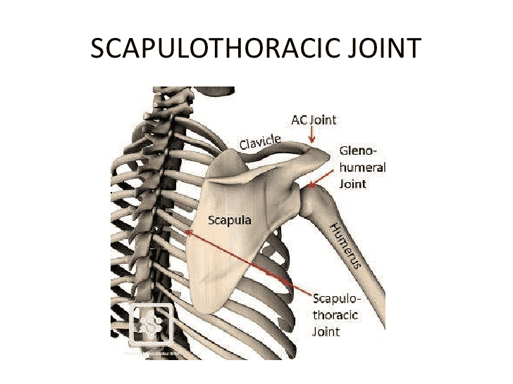 What Are The Various Joints In Shoulder And Their Functions?